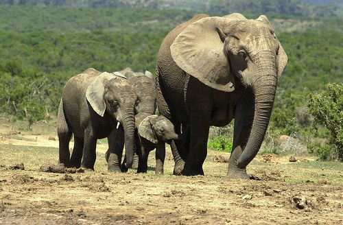 Addo park south africa