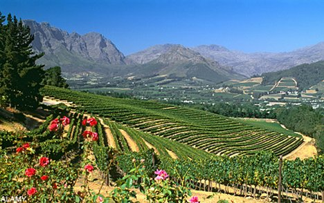 Wine lands south africa